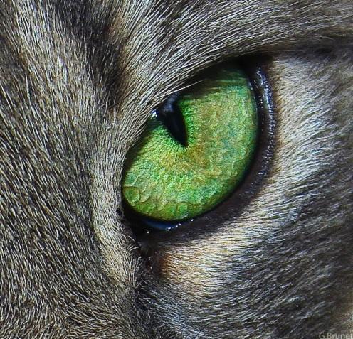Cats Want To Kill Us!