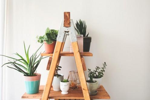 Homemade Plant Shelf (Craft/DIY)