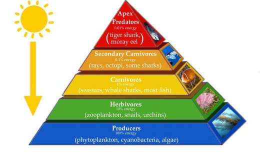 importance of ecological pyramids