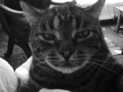 Spirit Cat in the Bardo