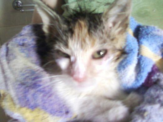 Ambre after her bath