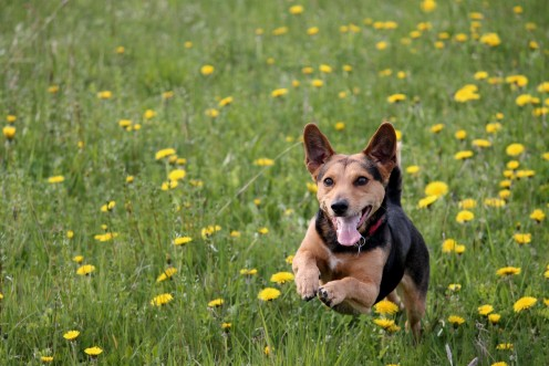 Train a Great Recall With Your Dog's Dinner