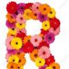 Reshma jeno profile image