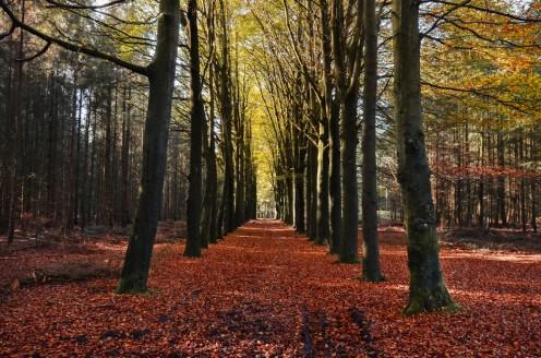 Autumn Orange Leaves Tree Trail