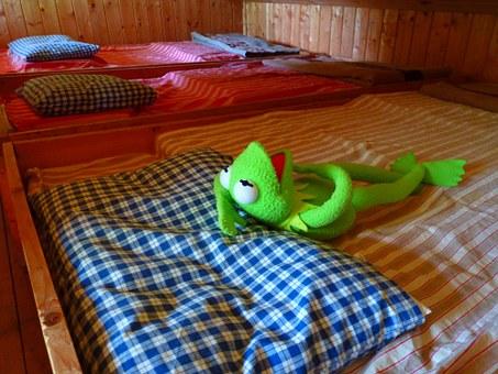 A Sleeping Frog