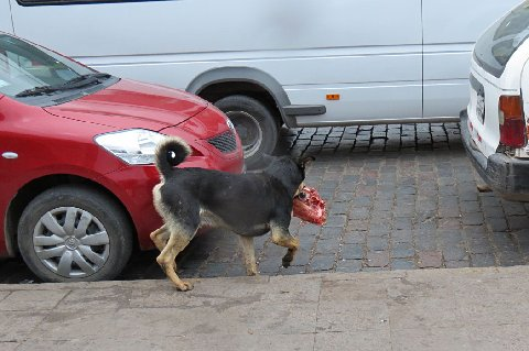 Notice that the dog didn't steal an apple from inside the market.