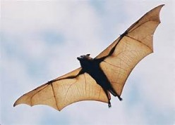 Celebrate Halloween by Learning About Bats
