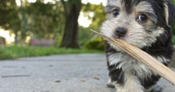 Why Sticks Aren't Good Chew Toys For Dogs