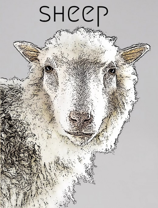 2018 Sheep horoscope