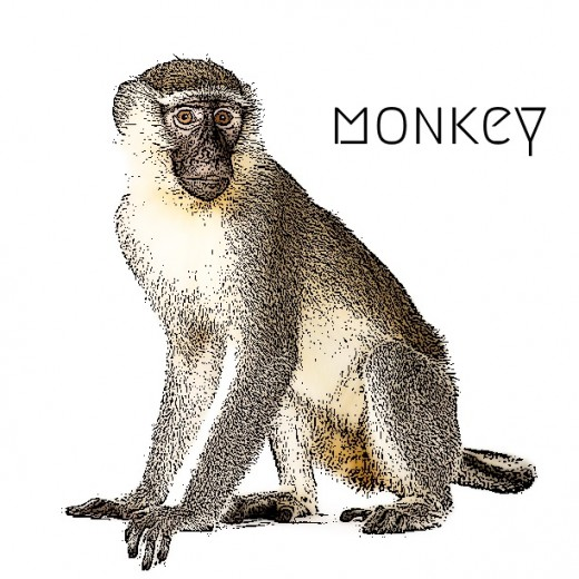2018 Monkey horoscope