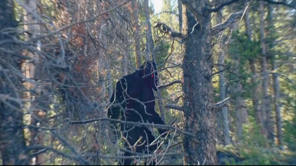 Bigfoot in Leadsville, Colorado