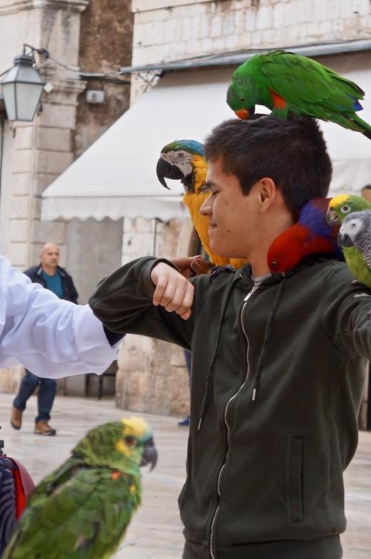 Bird Expert