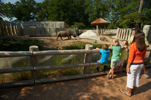 Young visitors enjoying view of rhino.