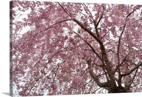 Under the Peach Tree