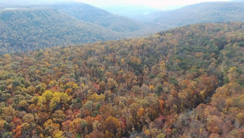 Fall Color in the mountains.  This photograph was taken in the mountains near Jasper, TN