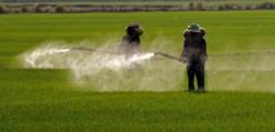 Banning Glyphosate
