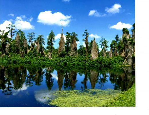 Gum Drop Swamp, near Land O' Lakes, FL