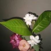 SidratulMonteher profile image