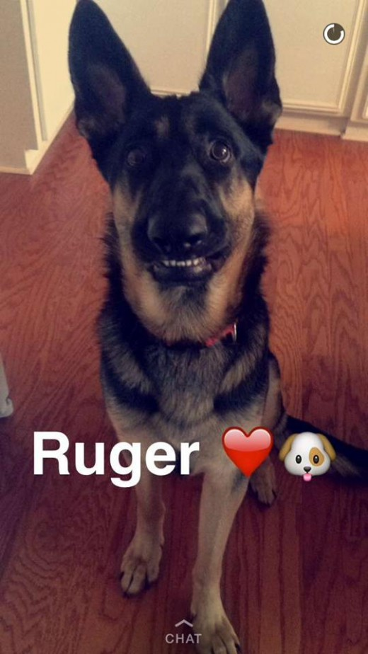 Ruger as a puppy in 2015