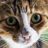 Olivia Davis profile image