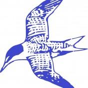 jgshorebird profile image