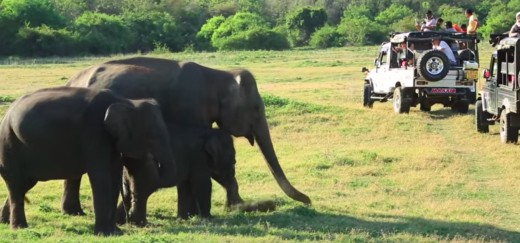 Safari in National Park of Kaudulla