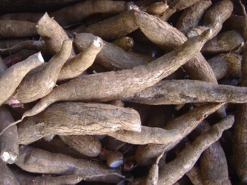 Yuca or cassava is a root vegetable widely used in the Caribbean.
