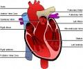 Ailments That Will Break the Heart