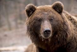 Bear Idioms