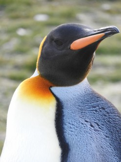 15 Interesting Facts About Emperor Penguins