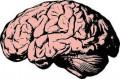 Mind Brain And Body