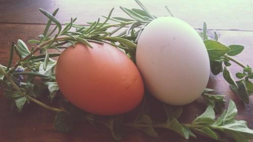 Eggs & Herbs