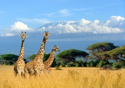 Answering the Call of the Wild: The Top African Safaris
