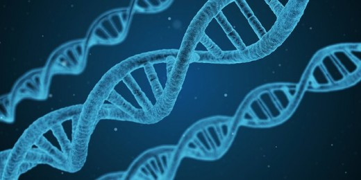 DNA - The natural way to pass on our traits through our genes