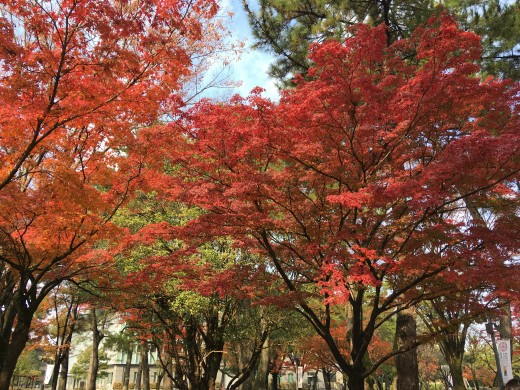 This is from 11-24-2017. The fall leaves in Nara.