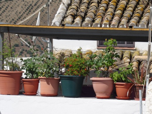 Typically Spanish, pot plants decorate every empty corner and wall