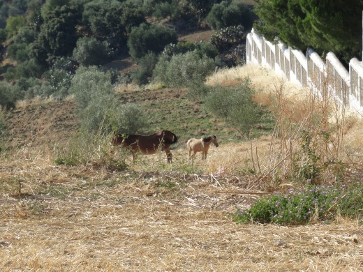 When you look down at all the olive groves around you, there are horses to be seen!