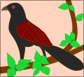 Call of the Coucal