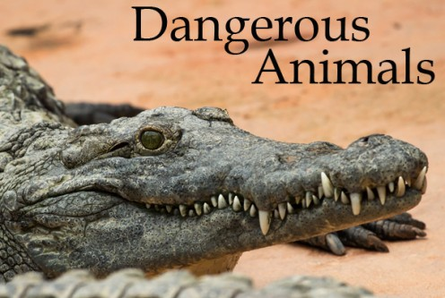 Fyi: World's Most Dangerous Animals