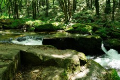 Photographs From Around Cornwall: Golitha Falls