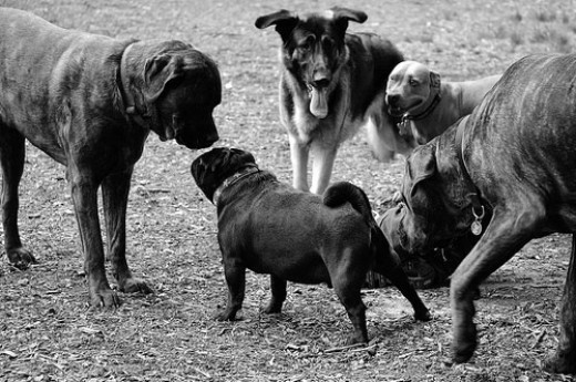 Don't swarm a new dog. Slow introductions are much better than all at once.