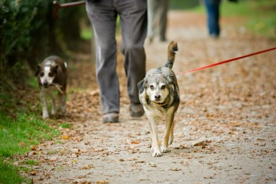 Walk your puppy often! Walks allow your puppy to meet and greet new people! This will help to build confidence!