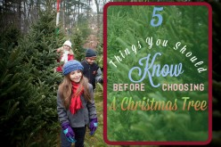 5 Things You Should Know Before Getting a Christmas Tree