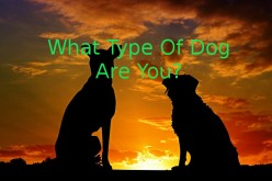 What Type Of Dog Are You For God?
