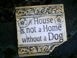 Tales of a Dog-Sitter, Haiku