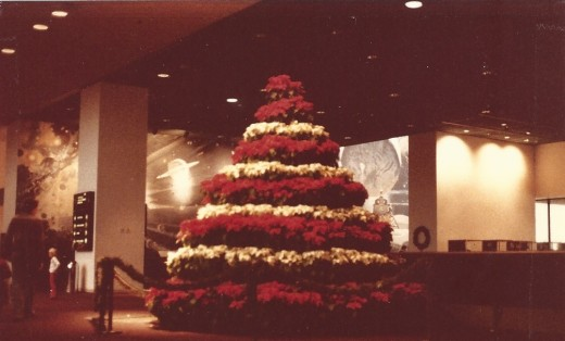 Poinsettias at the National Air & Space Museum.