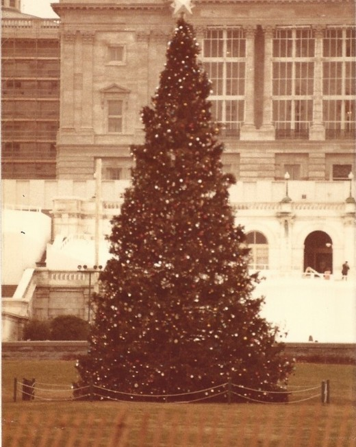 The U.S. Capital's Christmas Tree.