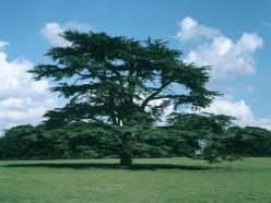 Extra-Curricular Works: How to Pass an Environmentalist Arrangement