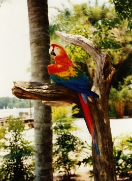 We were greeted by this beautiful parrot on Discovery Island