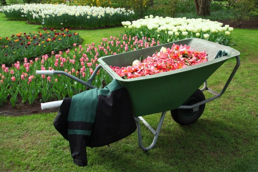 Choosing the Perfect Wheelbarrow